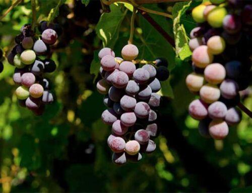 Penticton Wine Region